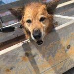 犬と入れる海水浴場