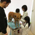 動物のお医者さん体験を行いました!
