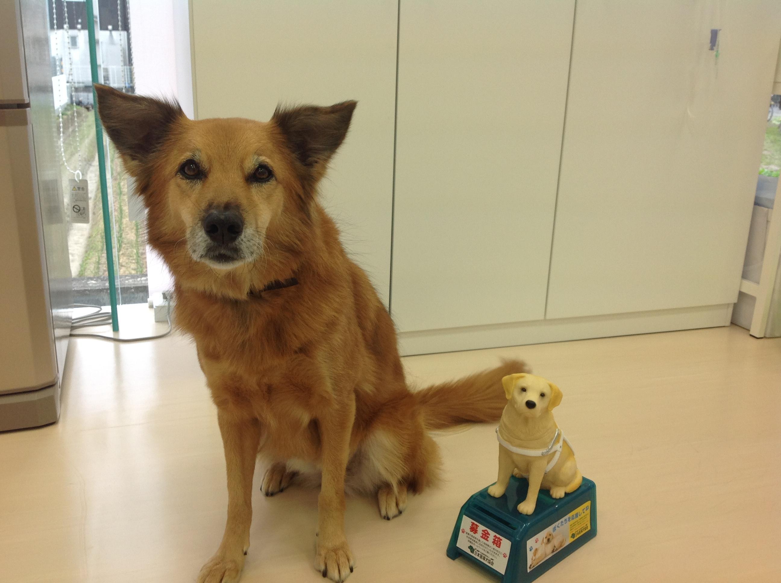 求人−動物看護師募集中です-募集終了致しました